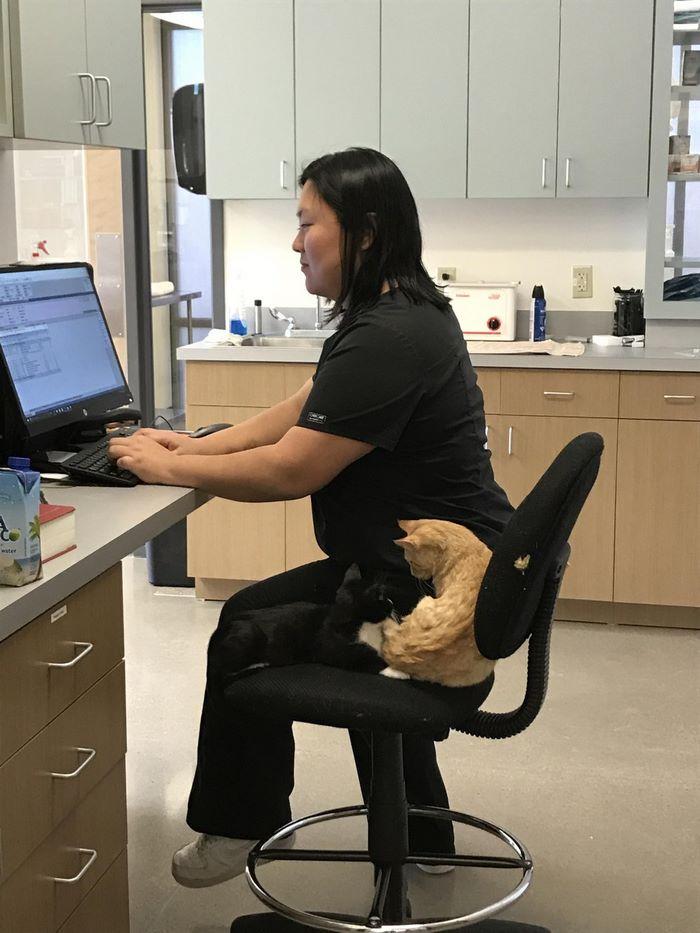 vet-office-cat-calms-patients-ron-4