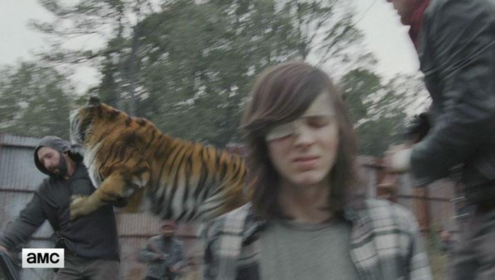 walking-dead-tiger-man-seven-season-shiva-1
