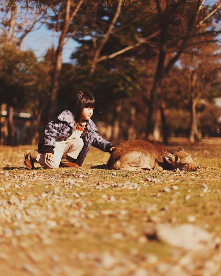 Beautiful Life In Nara, Japan