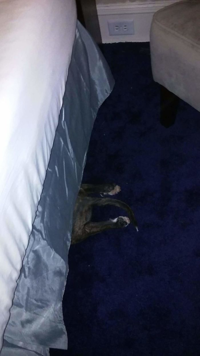 She Needs To Take Her Medicine And Thinks If She Hides I Won't Find Her. But She Really Stinks At Hide And Seek!