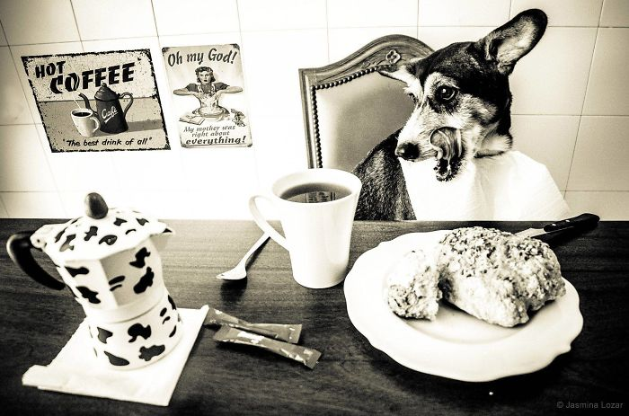 Busted: I Photographed My Dogs Caught In Different Situations