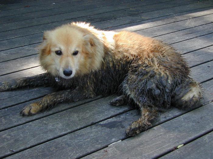 After Mud