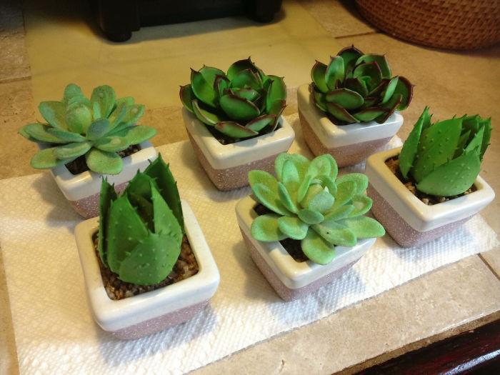 Mi madre llevaba 5 años cuidando de estas plantas y acaba de descubrir que son de plástico