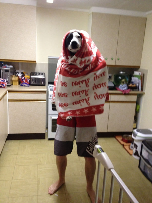 Heard My Husband Telling The Dog To Stay Still In The Kitchen, Walked In And This Greeted Me