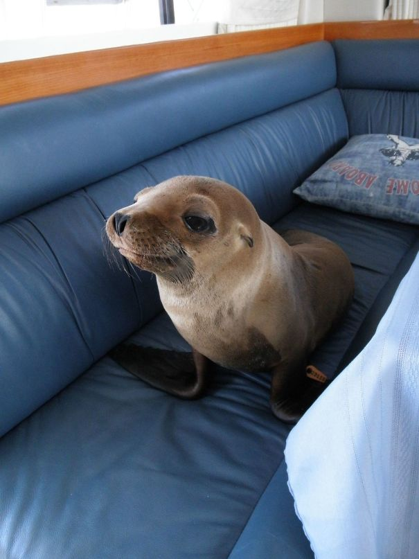 This Little Guy Jumped Onto Our Boat, Strolled Into The Cabin And Made Himself At Home On The Couch