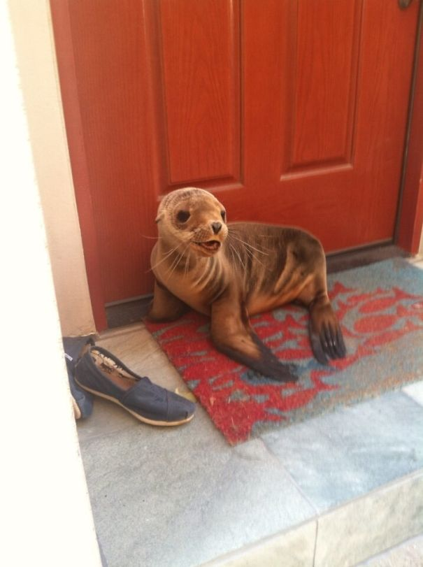 I Live By The Beach And This Little Guy Just Popped By For A Visit