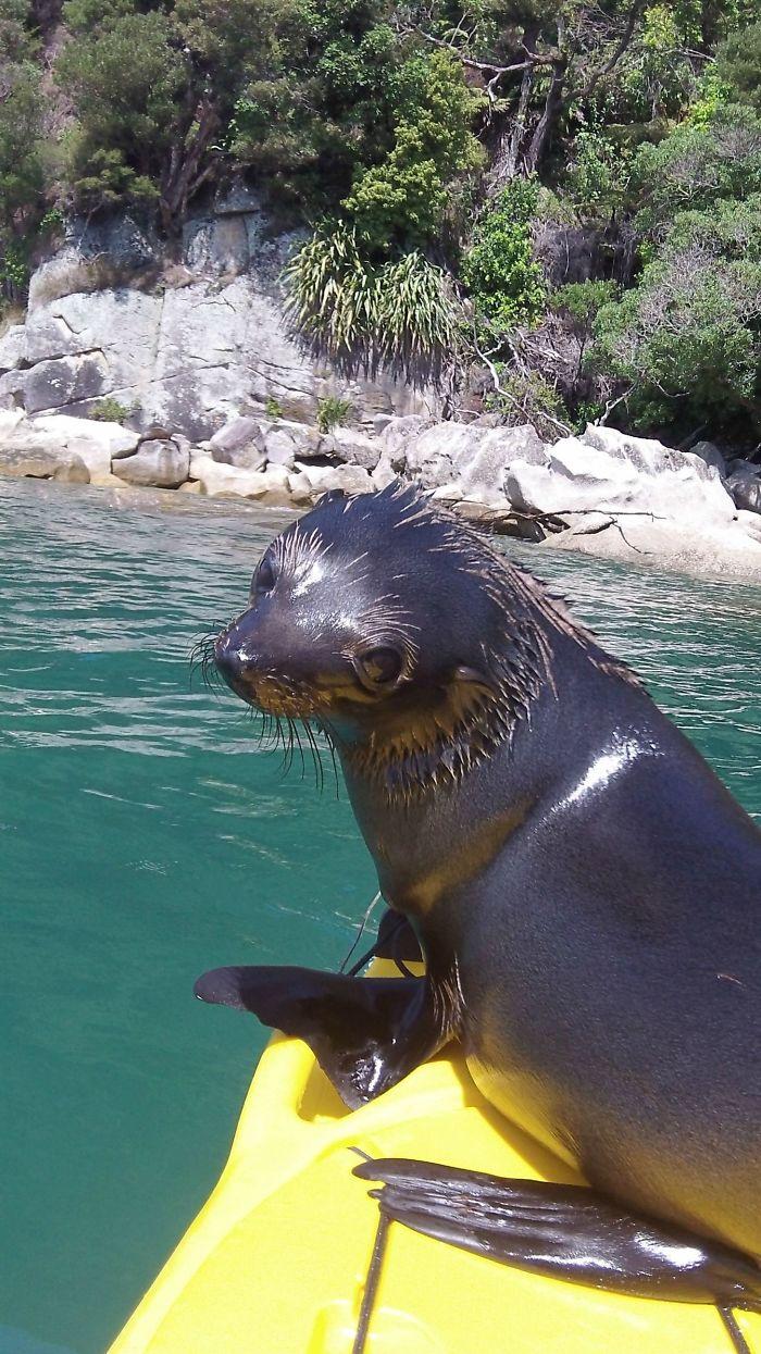 Este amigo saltó sobre mi kayak en Nueva Zelanda