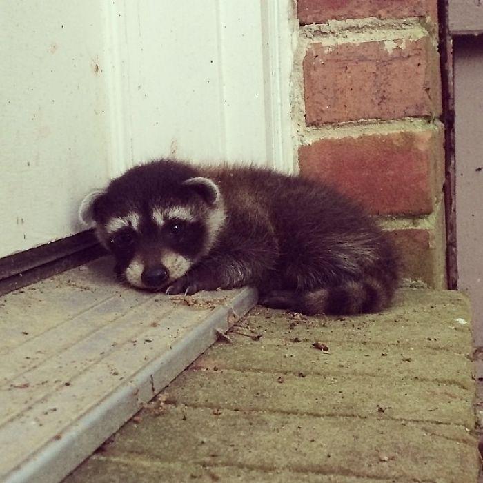 Lo encontré esta mañana en la puerta