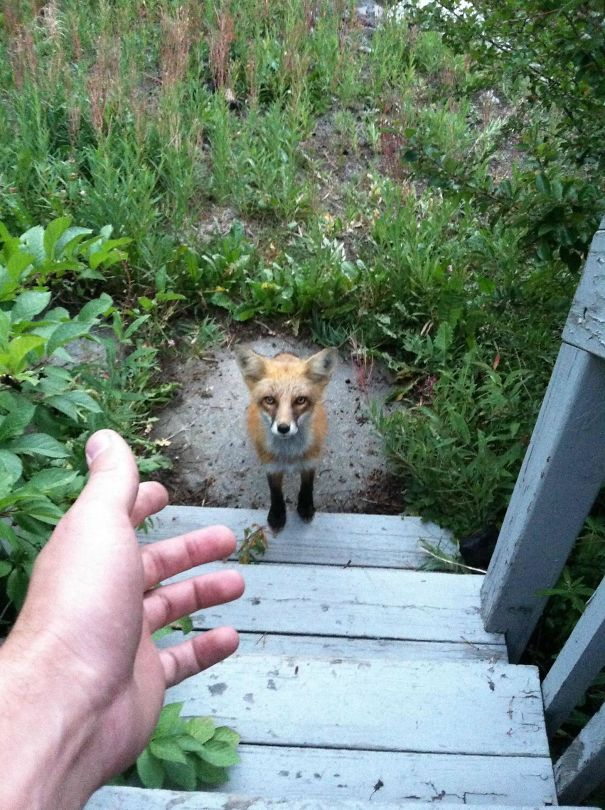 This Guy Wanted To Come In The Cabin