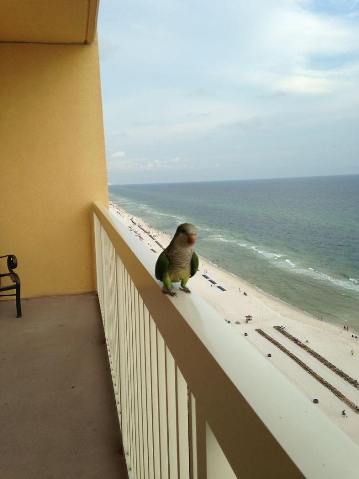Viene a vernos todos los días en esta playa panameña para que le demos pan y plátano