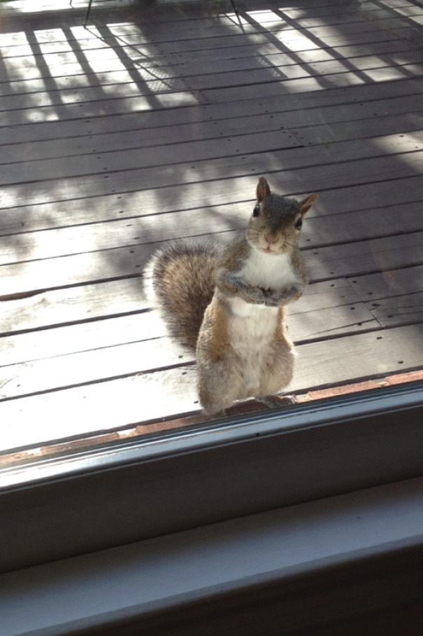 Every Morning My Grandmother Feeds This Squirrel A Peanut, So Every Morning It Shows Up At Her Door. This Was Him Today