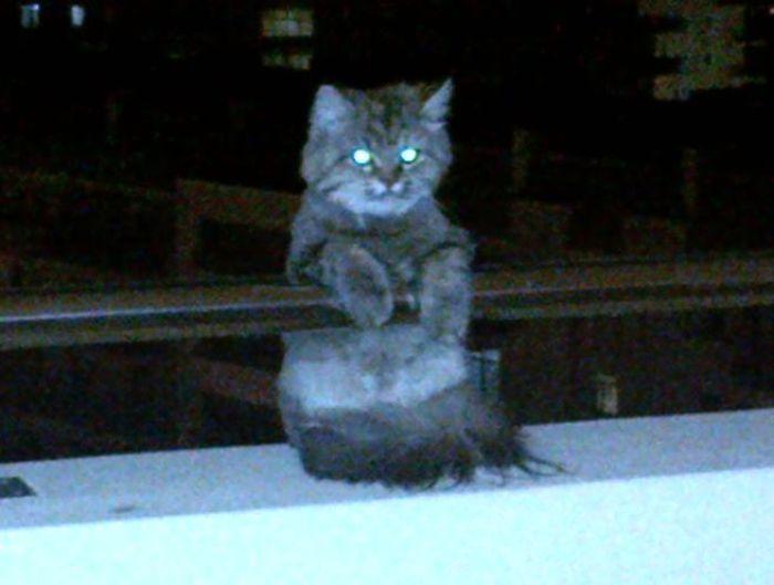 Vivo en un 7º y este gato estaba en el balcón. No tengo gato. Voy a morir