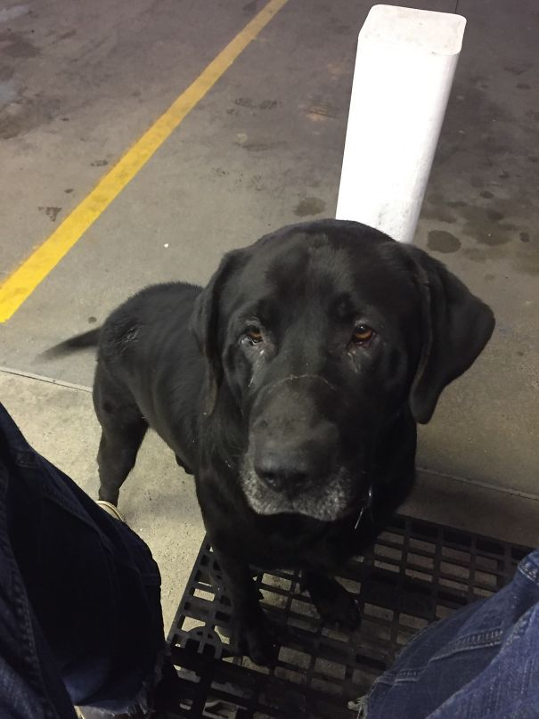 While He's Not As Cute As Some Of The Dogs On Here, Meet Bruce, The Big Ol' Fat Boy Who Visits Me At Work For Some Free Grub