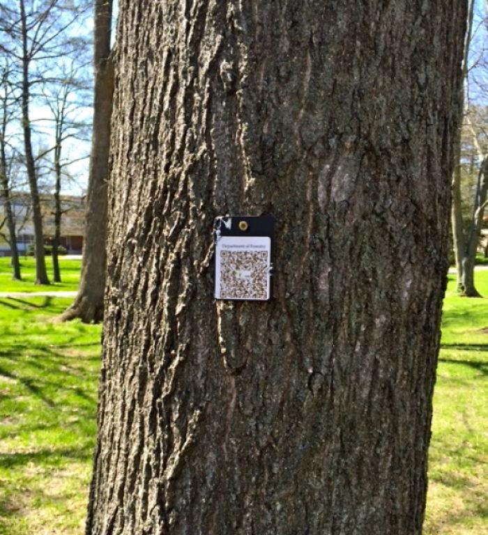 En mi universidad ponen códigos a los árboles para quienes quieran identificarlos