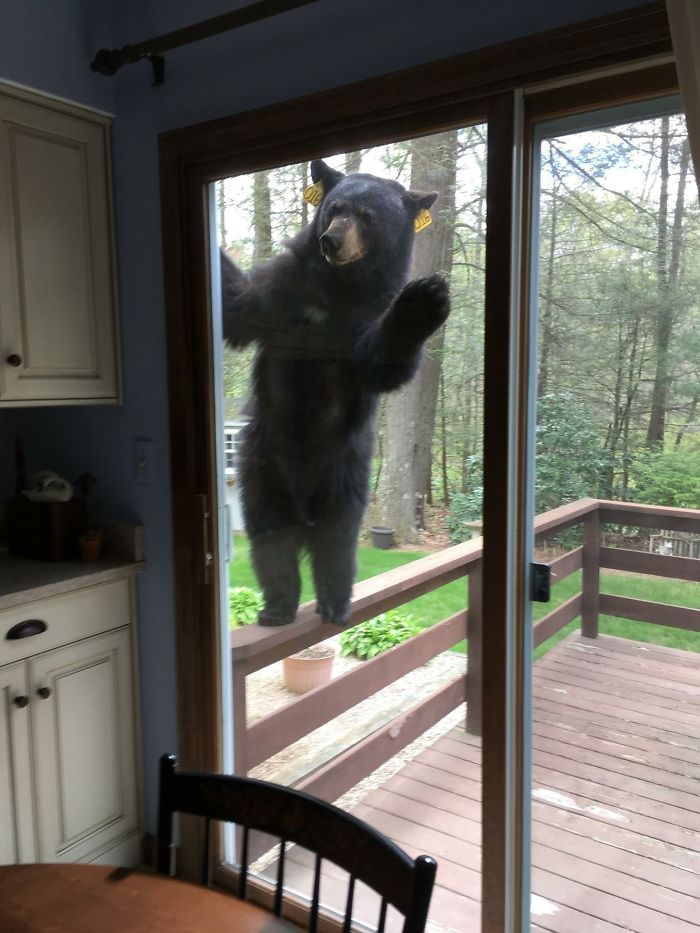 Ha olido los brownies que estoy haciendo y quiere entrar