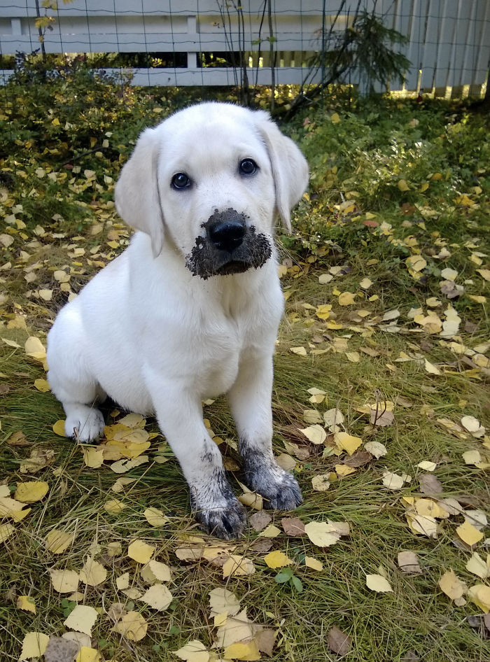 I Did Not Eat Mud