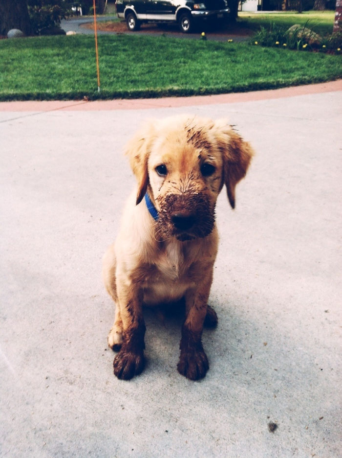 Muddy Puppy Is Muddy
