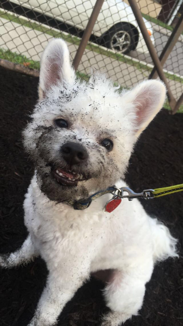That's One Dirty Mischievous Pupper.. And He Knows It!