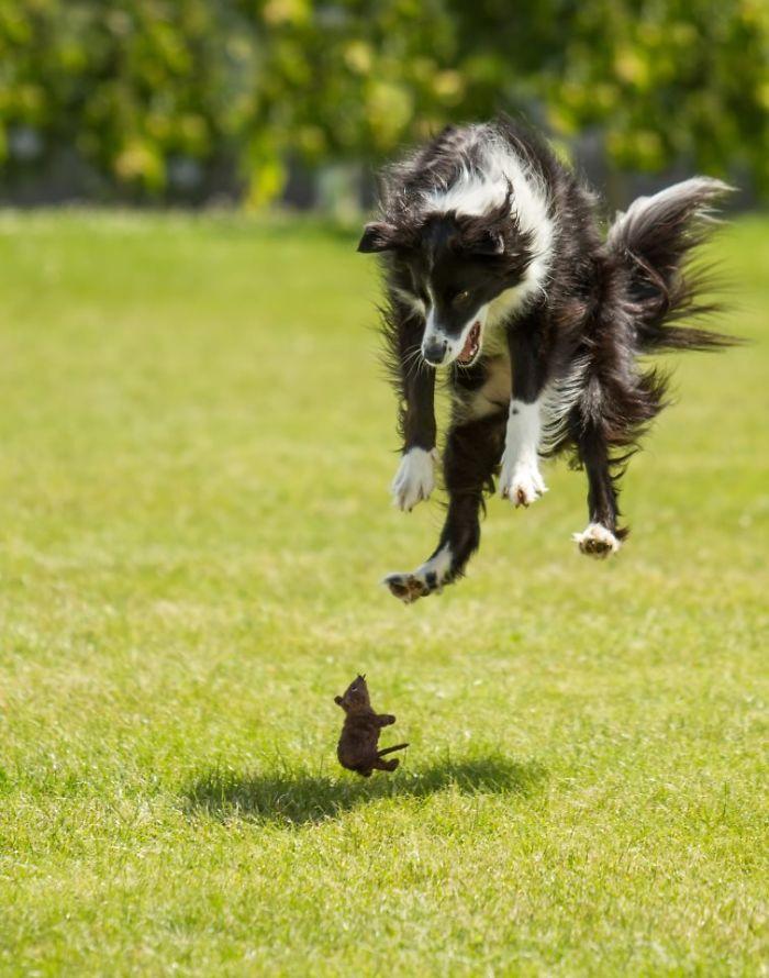 ¡Oh dios, un ratón!