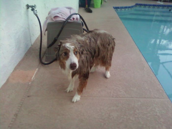 Estaba durmiendo, se asustó con un coche ruidoso y se cayó a la piscina