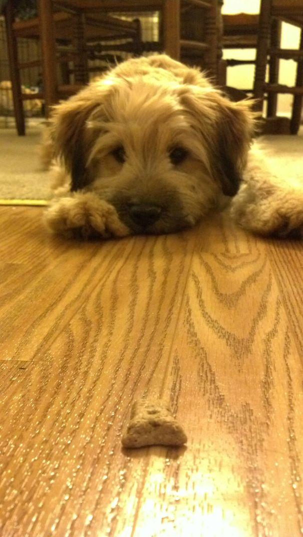 Http Www Petmd Com Dog Emergency Digestive E Dg Grape Raisin Toxicity Page