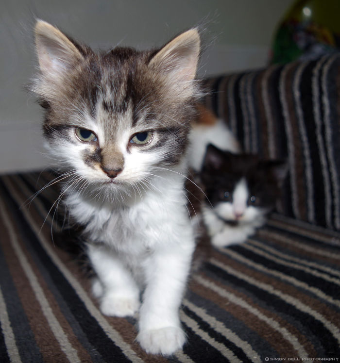 Angry Kittens