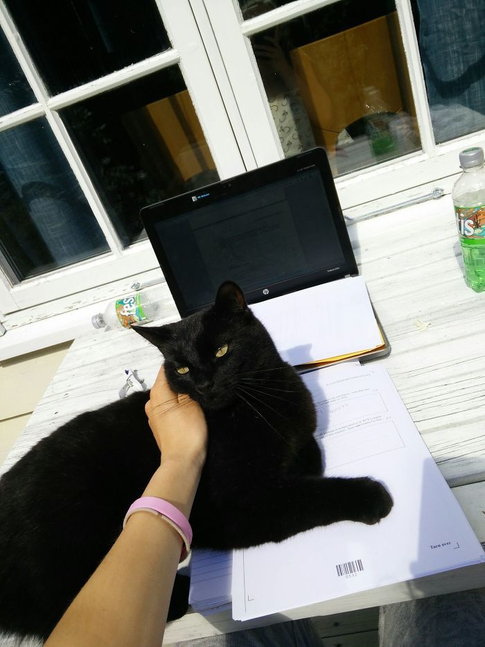 Guys, He's Back. I Tried Petting, He Doesn't Seem Satisfied. Still Studying, Still Not My Cat