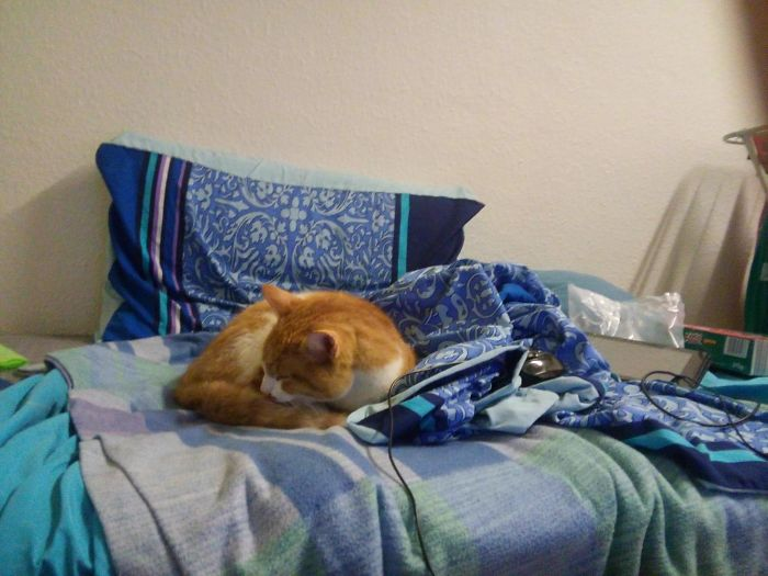 I Come Back To My Room, And The Cat Is On The Bed. I Don't Own A Cat...