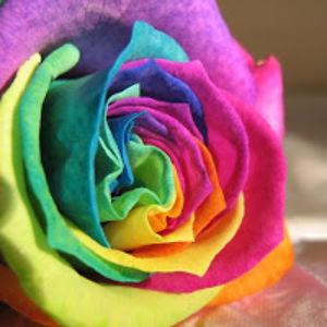 Bunga Suci