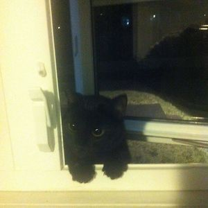 Had My Window Open To Have A Smoke When I Suddenly Heard Meowing... Turned Around To See This Guy