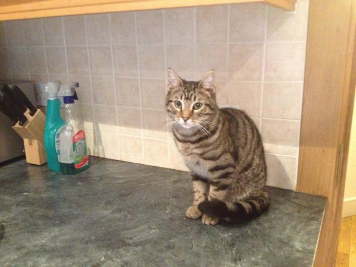 Just Going To My Kitchen And Saw Him. I Don't Have A Cat