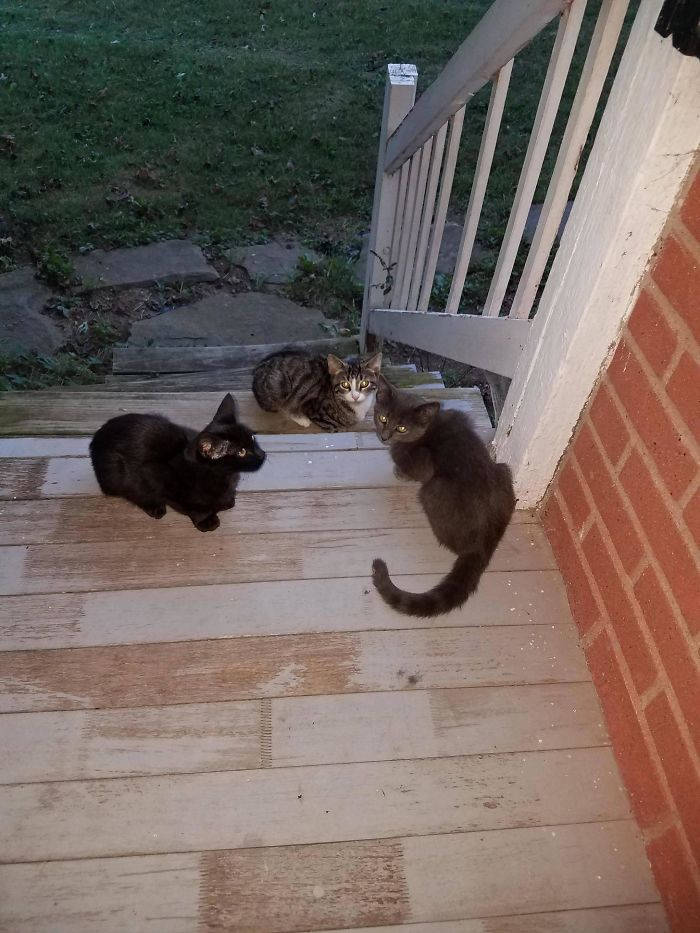 They Emerged From A Corn Field And Now They Chill On My Porch. I Call Them The Three Amigos