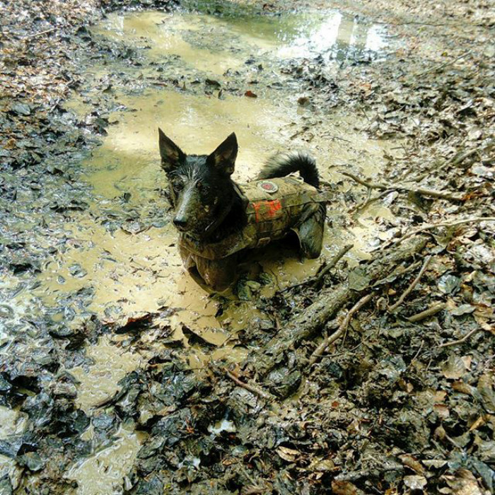 Nothing Like A Good Mud Bath!