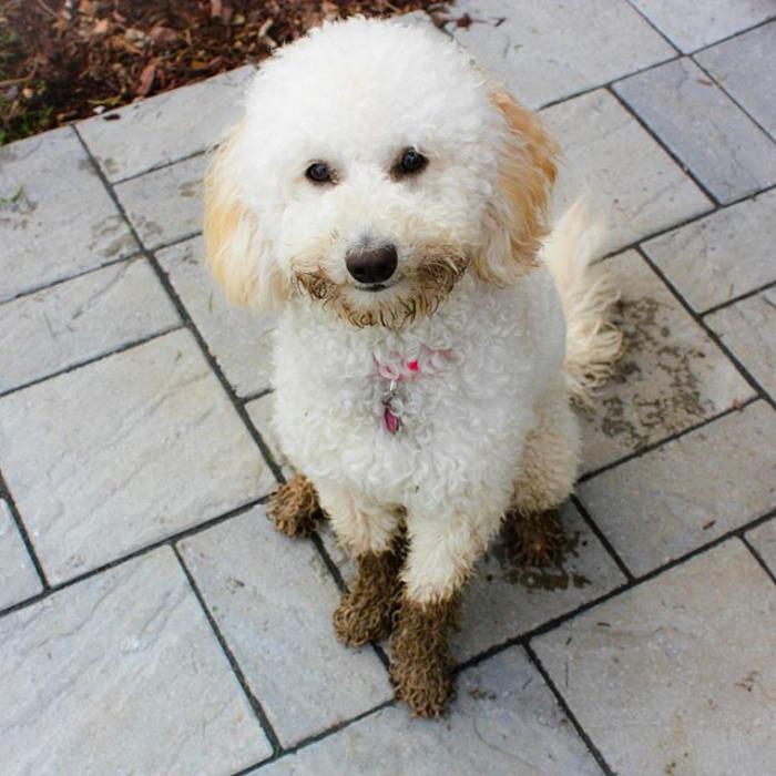 Muddy Spring In St. Nicolas, Quebec