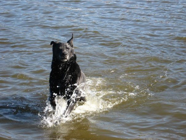 Black-Dog-FREE-591149de4907a.jpg