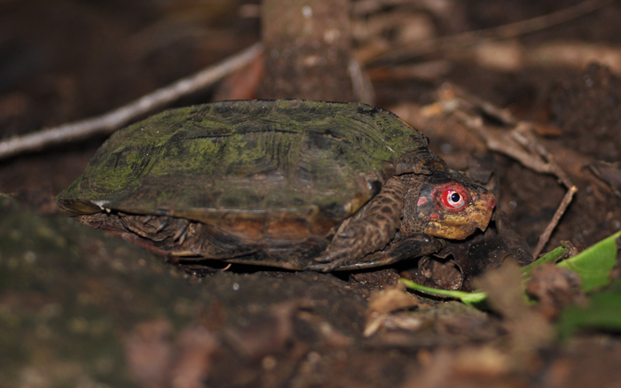 15 Endangered Turtle Species That You May Not Know Exist