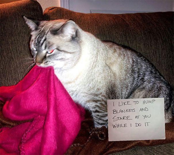 I Like To Hump Blankets