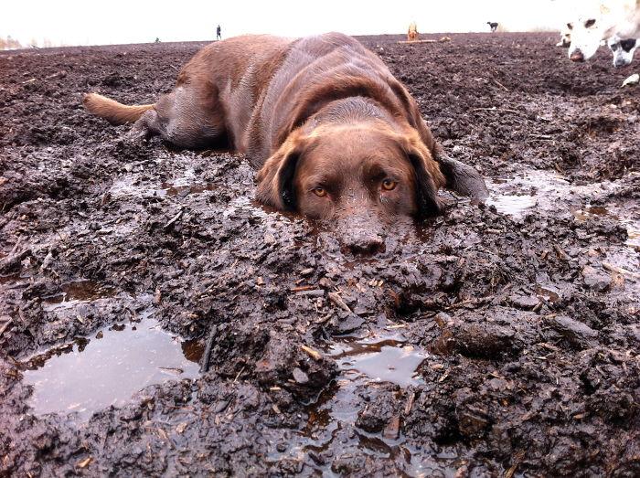Dogs Love Steamboat Springs, Mud Or Snow