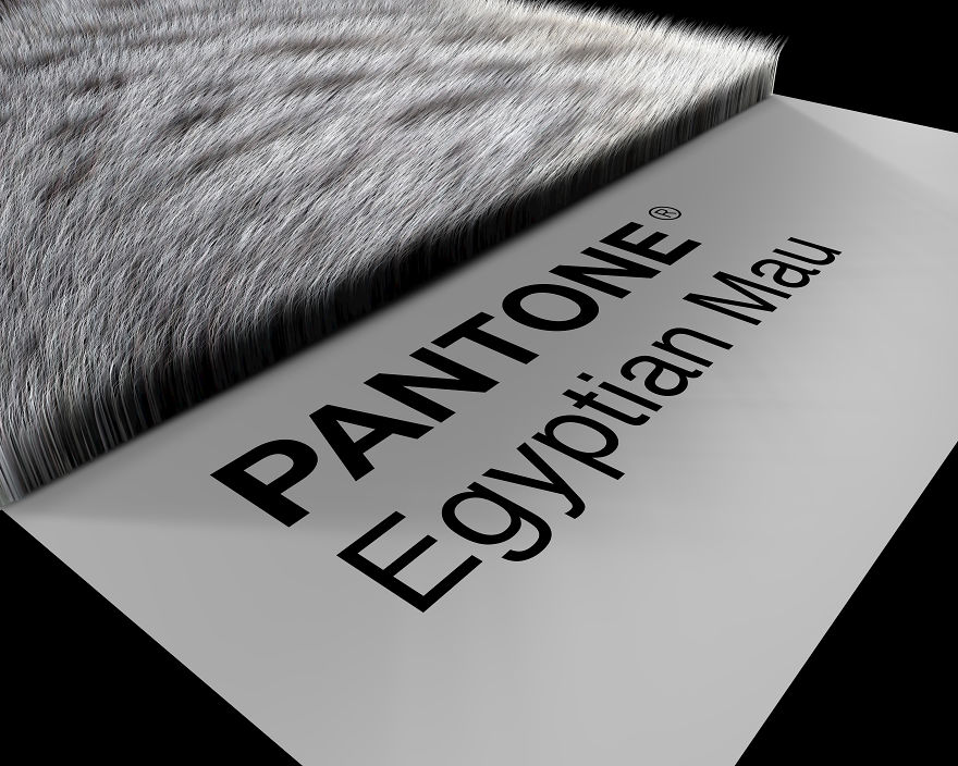 Egyptian Mau Prospective