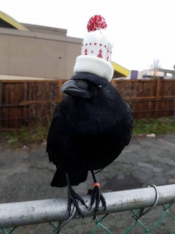 He Has A Hat.