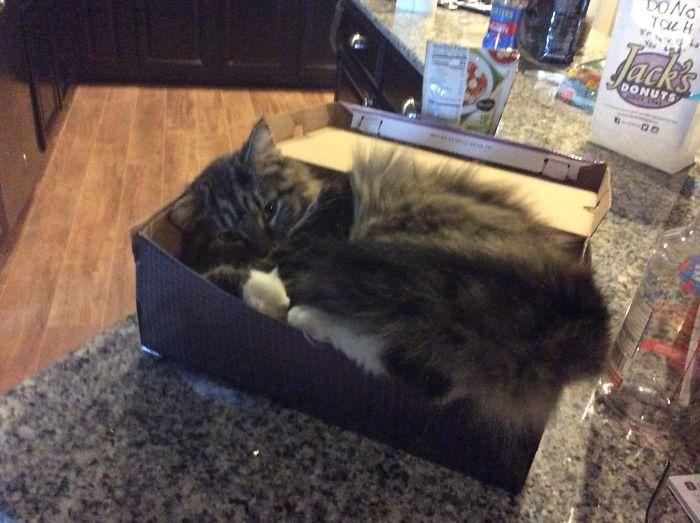 Kobayashi In A Shoe Box!