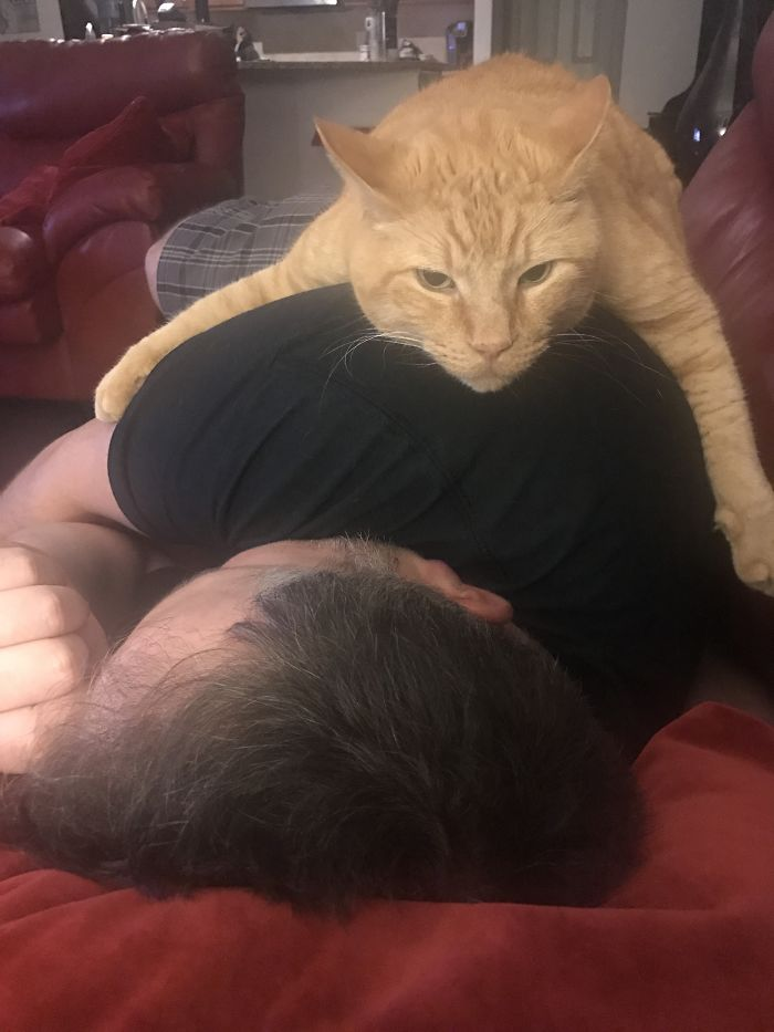 Walked In On My Husband And The Cat Having A Moment… I'm Not Sure The Cat Appreciated Being Interrupted.