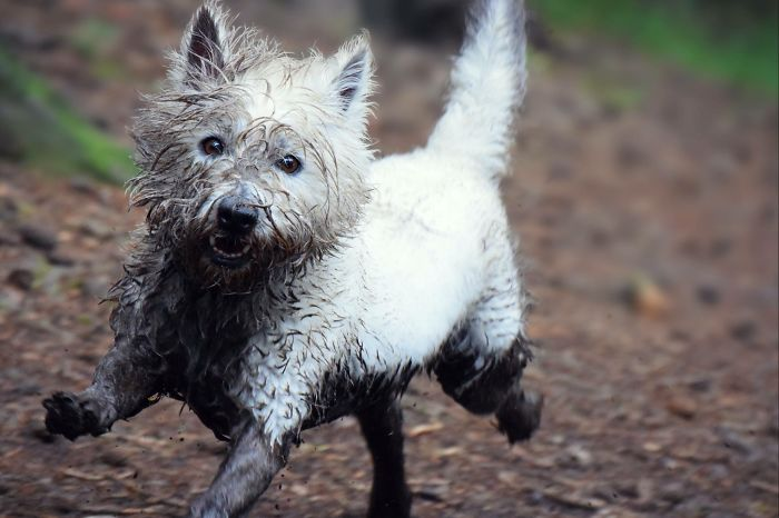 Casual Walk In The Woods, Not When There Is A Mud Bath Waiting For Me! People Pay For These In Spa's!