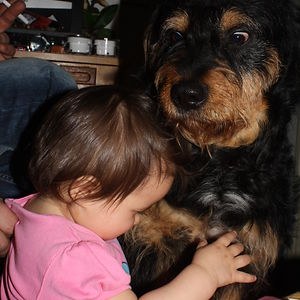 My Dog Nico Is Afraid Of Little Humans.