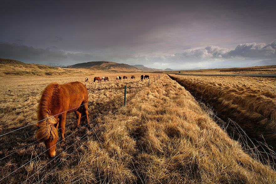 """""""icelandic Mustangs"""" - Vol.2"""
