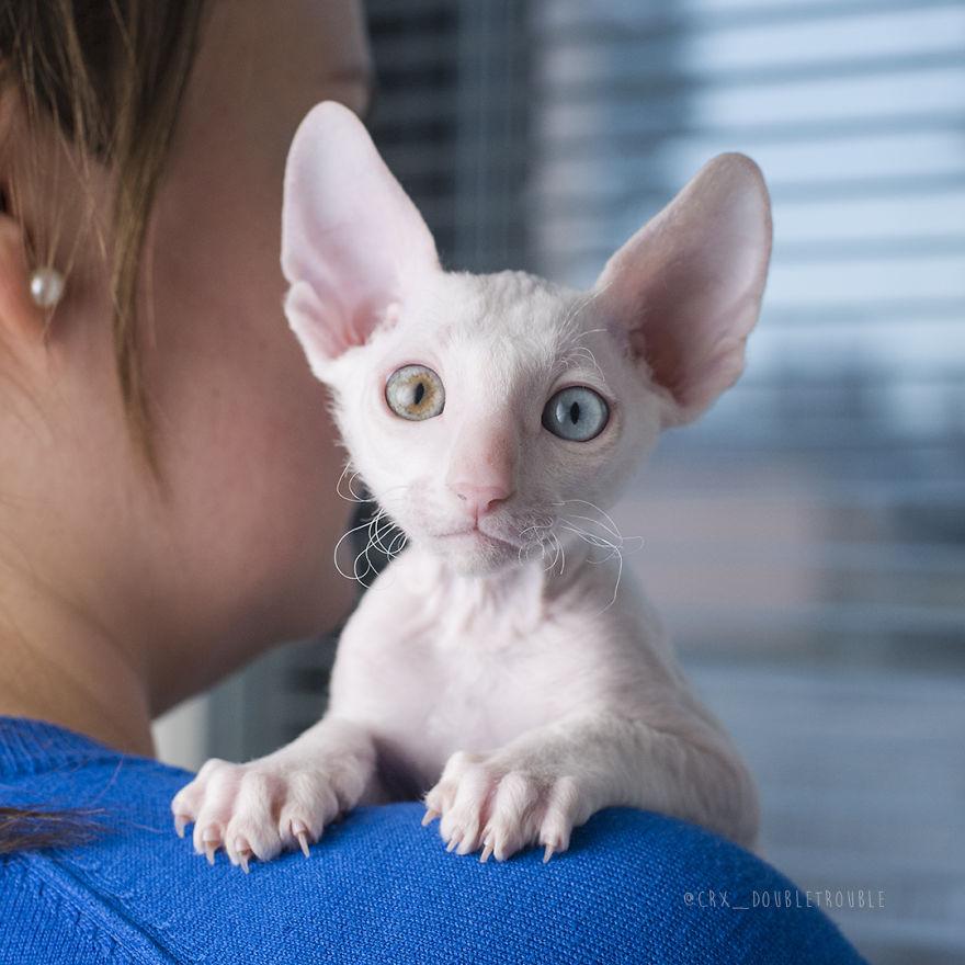 worlds best cat litter clumping formula