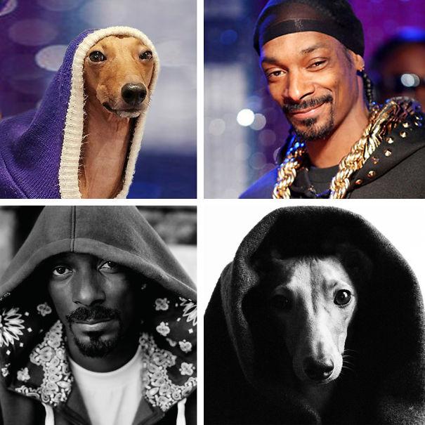 Snoop-5921f5ef5265d.jpg