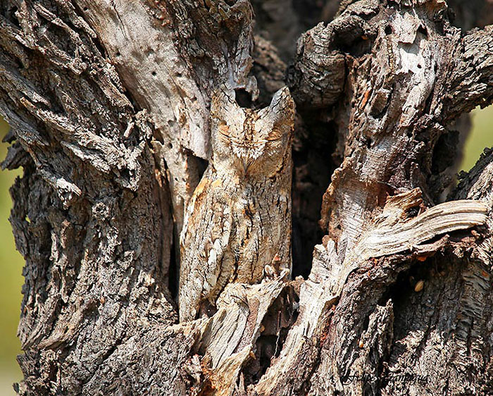 10+ Unbelievable Examples of Animal Camouflage That Will Make You Look Twice