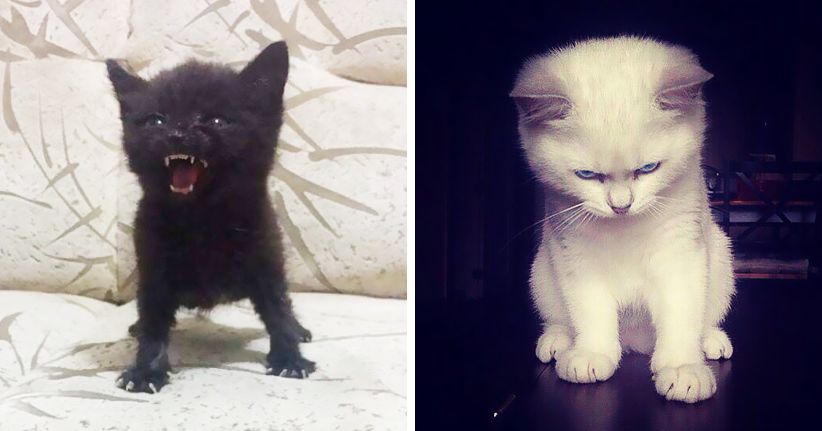 10+ Gatitos enfadados que exigen ser tomados en serio ahora miausmo