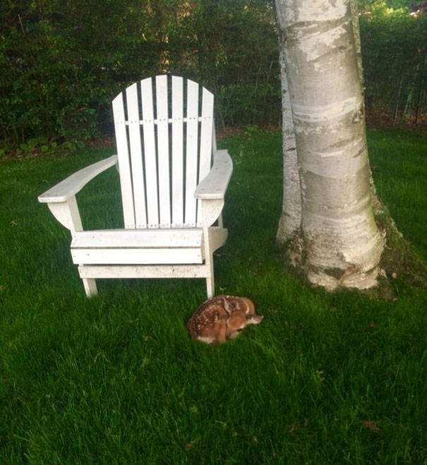 Saw This Little Guy While Working On Lawns This Morning
